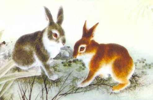 属兔的今年多大,总体运势不错