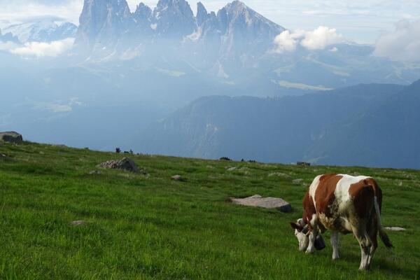 属牛的人最怕什么属相 肖牛只想逃离的三位属相