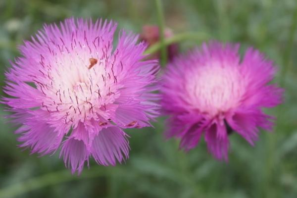 十月的花语是什么 花卉花语基础知识