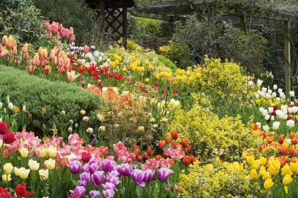 一月的花语是什么 诠释月份花卉花语