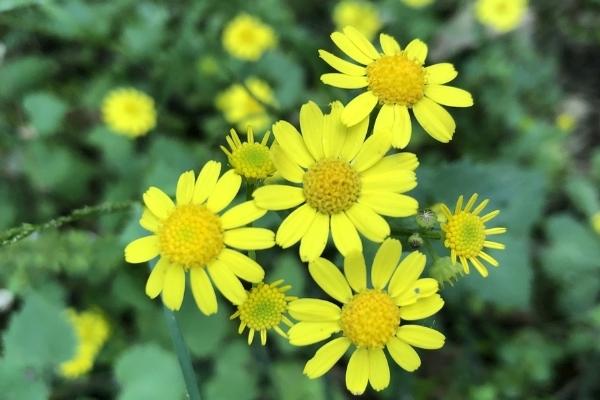 十一月的花语是什么 纯真无邪的花卉